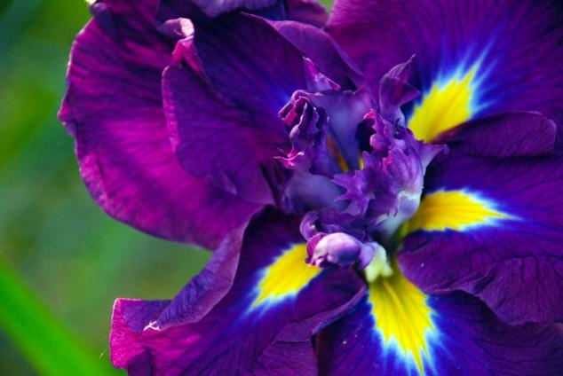 June Flower